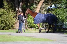 Thunder the Horse Wellington's Kiwi Holiday Park Wellington's Kiwi Holiday Park
