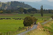 Hauraki Rail Trail Green Farmlands