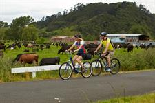 Hauraki Rail Trail Farmlands