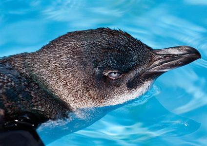 Penquin Dolphin Blue