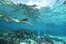 d - Sofitel Moorea Ia Ora Resort - Snorkelling Sofitel Moorea Ia Ora Beach Resort