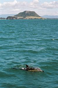 Dolphin & The Mount