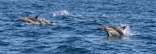 IMG_9708 Dolphin Blue