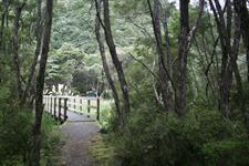 Wairua Bridge Totally Tarawera