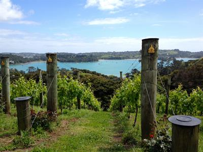 waiheke vineyard