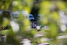 Leafy Dunedin Sites Aaron Lodge Holiday Park