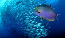 d - Maitai Rangiroa - Diving Maitai Rangiroa