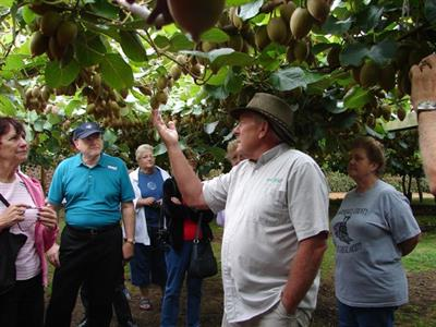 GMC under vines