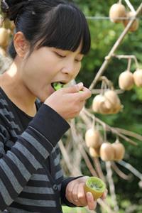 IMG_4237 Kiwifruit Country Tours