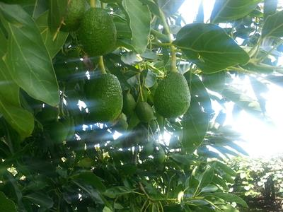 20160225_094257