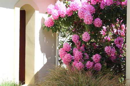 Spring Rododendrons at VdL Villa del Lago
