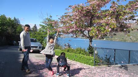 Spring car park blossom Villa del Lago