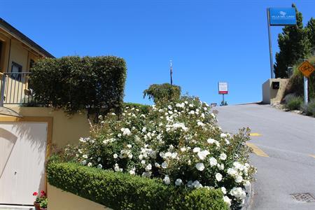 Summer roses Villa del Lago