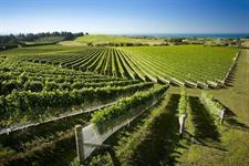 Supernatural Wine Co. vineyard Millar Road Hawkes Bay