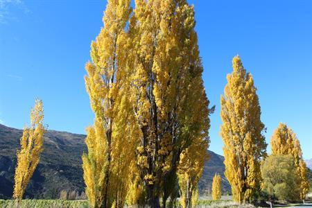 Autumn Gibbston 2 2017 Villa del Lago