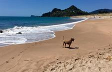 Tairua-Beach-Dog