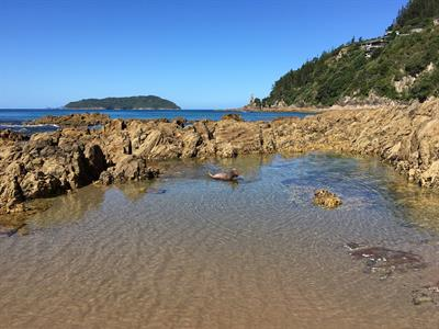 Tairua-Beach-Dog2 Pacific Harbour Villas