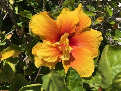 Hibiscus1 Pacific Harbour Villas