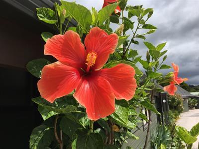 Hibiscus2 Pacific Harbour Villas