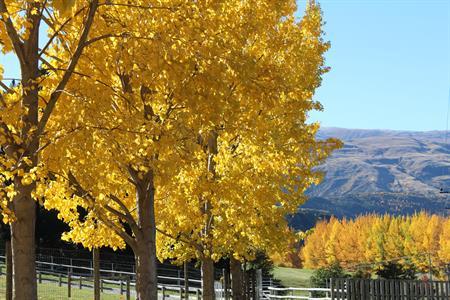 Autumn Malagans Rd Villa del Lago