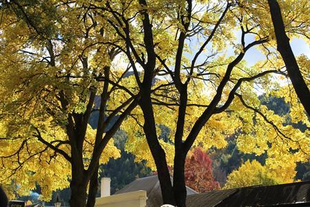 Autumn Trees Arrowtown Villa del Lago
